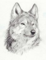 Wolf Head by Penguinity