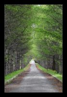 Green alley by Frider