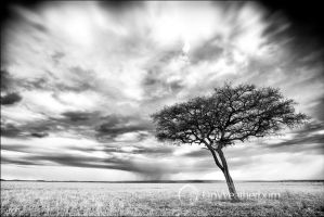 Storm over the Maasai Mara by MrStickman