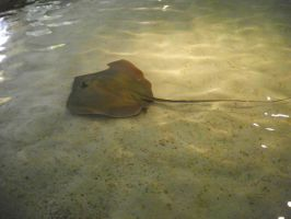 String Ray I by emobear