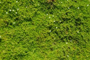 Groundcover Texture-Stock by Thorvold-Stock