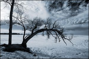 March in Ontario by IgorLaptev