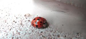 Holy Red Lady Bug by Boz-Mon