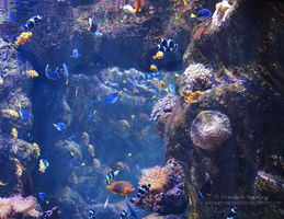 Aquarium Photo 6 by PeppermentPanda