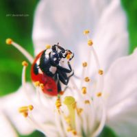 .: spring ladybug II :. by all17