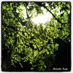 Leaves and Sunlight by Kalika-Shai