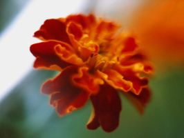 macro flower 2 by vashti