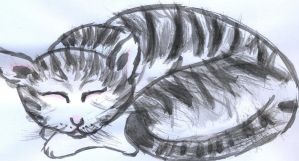Sleeping Kitty by animalluver12s