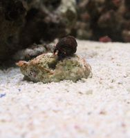 Hermit Crab by tooterfish-popkin