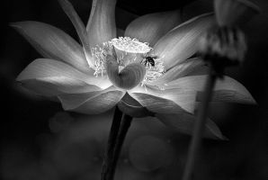 BUSY BEE by SAMLIM