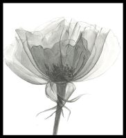 .:Translucent Bloom:. by SARScastic