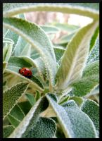 First ladybird of spring by furiousbullet