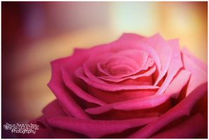 Rose of Destiny by Clerdy