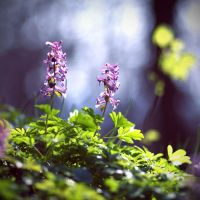 Springtime3 by BlueFish24