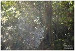 A Spider Web by TheMan268