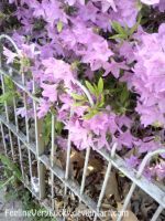 Purple Azaleas by FeelingVeryLucky