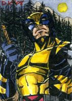 Wolverine Forest Sketch Card by DKuang