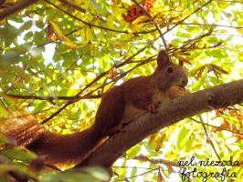 Squirrel by CocoMagnolia