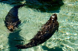 Circle of seals by lauafer