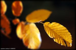 Yellow by ciprinel