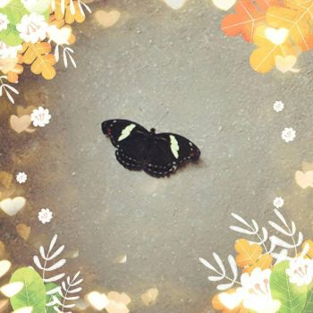 The Butterfly by Mely14Arts