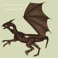 Brown Dragon 2 - Feb 17 08 by markopolio-stock