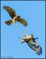 Duel IV by AirshowDave