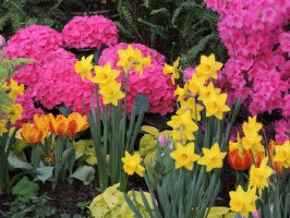 Spring Colors Hot Pink and Yellow by dmguthery