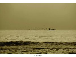 hungry birds... angry fishermen by 13-septembre