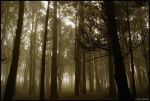 Forest Session II by PHUCKOFF