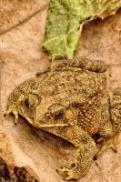 Toad by rAtser