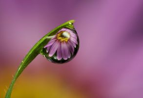 Dew Drop Refraction 12 by Alliec