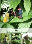 Butterflies pack-Unrestricted by Cat-in-the-Stock