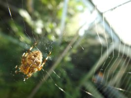 Corner Spider by Embrace-The-Night