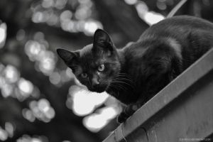 Cat on roof by IvaxXx