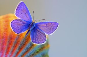 Blue Butterfly 1197076 by StockProject1