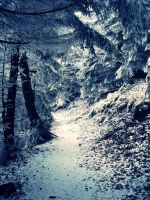 My way back home into forest by Mariadreamer
