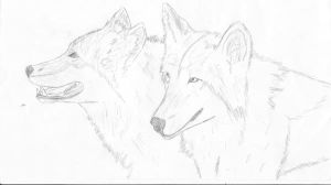 Two Wolves by chrisbeirne