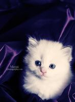 Purple eyes by mayat-s