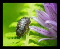Potato Bug and Chive by swashbuckler