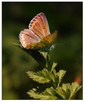 Curious butterfly by Nataly1st