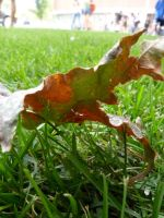 Leaf 2 by Meow-Stock