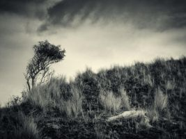 Tree on the hill by mb-neo