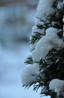 first snow by instant-noodle00