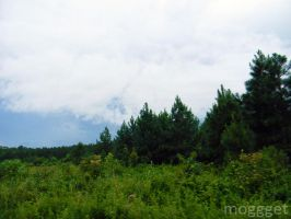 trees and clouds by MOGGGET