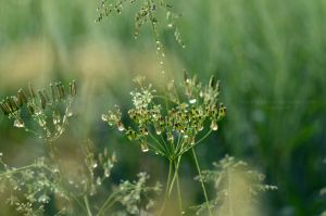 Good Green by Himmelsfalter