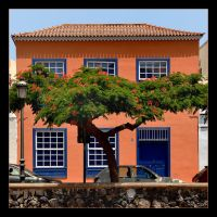Tree Or House - Tenerife by skarzynscy