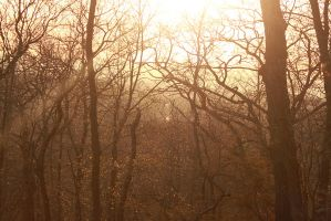 Light in the Forest by Scaphe