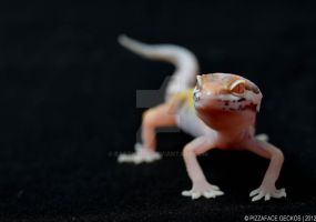 Snow Bell Albino by basticelis
