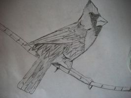 Old Crows Young Cardinals - Alexisonfire by SomberDimLight